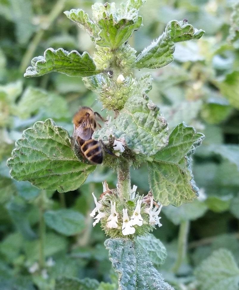 Pszczoła na szancie